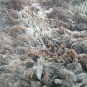 Fiber - Shetland raw fleeces (SE2SE eligible)