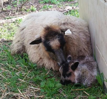 Mama Lily and baby Kira