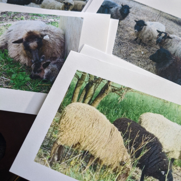 Set of 8 greeting cards